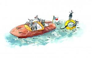 armadillo_boat